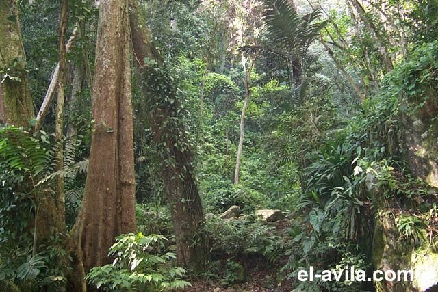 http://www.el-avila.com/images/selva_02.jpg